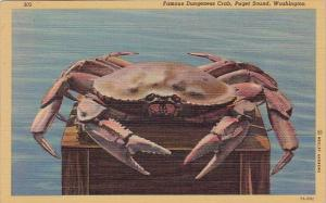 Famous Dungeness Crab Puget Sound Washington