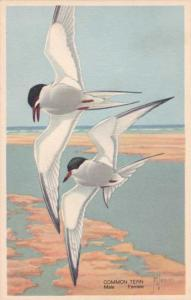 Common Tern - Wildlife Post Card Series - a/s F. L. Jaques