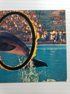 Vintage Postcard Marineland Of The Pacific bottle nose dolphin ring of fire  388