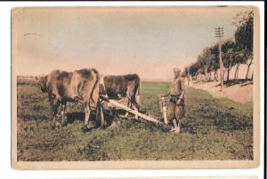 Egypt Farm Labourers, Oxen Ploughing, On Active Service, 1919 Alexandria Cancel