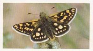 Grandee Vintage Cigarette Card British Butterflies 1984 No 32 Chequered Skipper