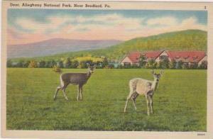 Deer in Alleghany National Park, near Bradford, Pennslyvania 1930-40s