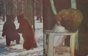 Yellowstone National Park Bears Exploring Garbage Cans For Food