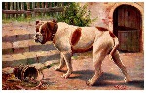 Dog ,  Boxer