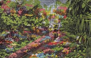 Interior Of Greenhouse Shaw's Garden Saint Louis Missouri
