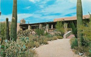 Tuscon Arizona~Sonora Desert Museum~Cactus in Foreground~1950s Postcard