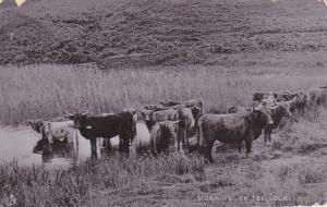 RAPHAEL TUCK & SONS', #6517; ENGLAND, PU-1905; Highland And Lowland, Morning ...