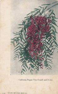 California Pepper Tree Branch and Berries, California, 1900-1910s