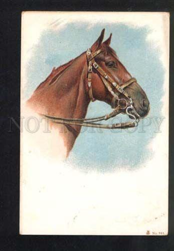 047318 Head of Bred HORSE vintage color Litho