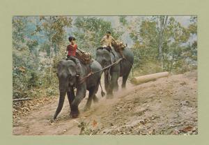 Elephants Postcard Thailand Animals Foreign Postally Unused