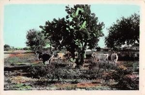 Rio Hondo  Central America Scenic View Tinted Real Photo Antique Postcard J48223