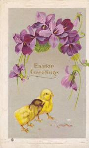 Easter Greetings, Chicks, Purple Flowers, PU-1914