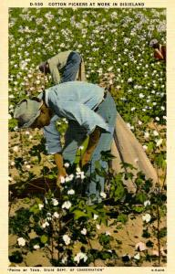 Cotton Pickers at Work in Dixieland