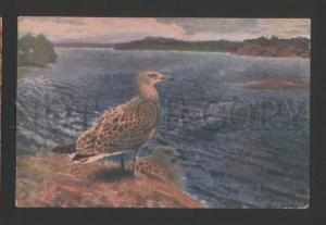 120157 North Seagull by LILIEFORS vintage Russian 1916 PC