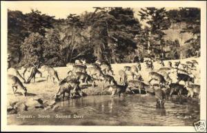 japan, NAVA, Sacred Deer (1930s) RPPC