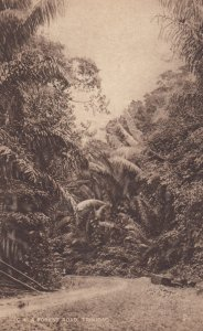 TRINIDAD , 00-10s ; A forest Road