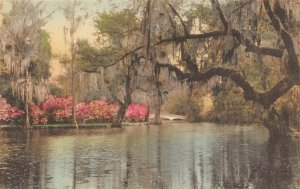 LP58 Magnolia Gardens South Carolina Hand Colored Albertype  Postcard