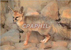 Postcard Modern Fox Blanfort WWF World Wide Fund for Nature