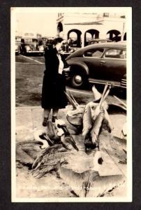 FL Women feeding Pelicans St Petersburg Florida RPPC Real Photo Postcard Old Car