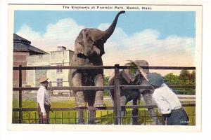 Zoo Keepers and Elephants, Franklin Park, Boston, Massachusetts,