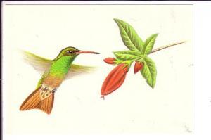 Pine Warbler, North Amer4ican Birds, Reader's Digest
