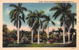 Royal Palms in Coconut Grove, Miami, Florida, Early Linen Postcard, unused