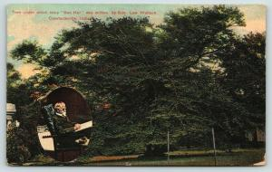 Crawfordsville Indiana~Ben Hur Tree~Written Under~Author Lew Wallace Inset~1910