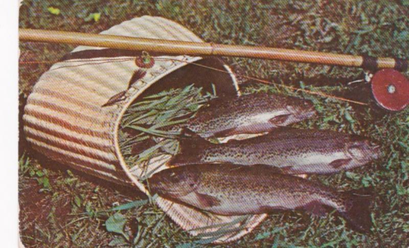 Pennsylvania Greetings From Trout Run 1956