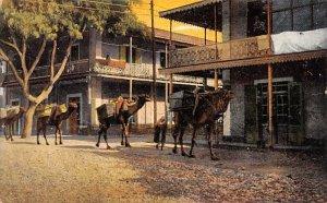 Negrelli Street Ismailia Egypt, Egypte, Africa Unused
