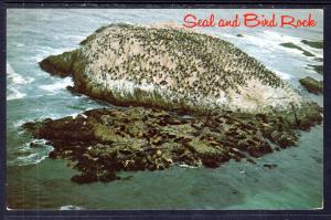 Seal and Bird Rock,CA BIN