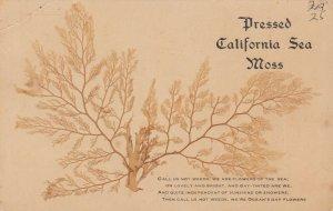 California, 1900-10s ; Pressed California Sea Moss