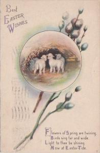 Easter Wishes Pussy Willow and Lambs 1909 Signed Clapsaddle