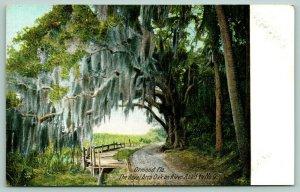 Ormond Florida~Royal Arch Oak Drips Spanish Moss~River road to No 9~Bridge~1905