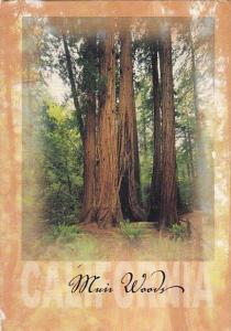 Muir Woods National Monument California