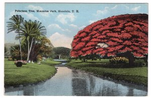 Honolulu, T.H., Poinciana Tree, Moanalua Park