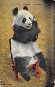 Bears Postcard Old Vintage Antique Post Card Panda, Forest Park Zoo, St. Loui...