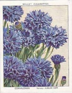Wills Vintage Cigarette Card Garden Flowers 1938 A Series No 8 Cornflower Jub...
