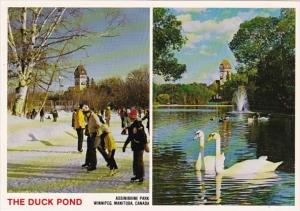 Canada Winnipeg The Duck Pond Assiniboine Park