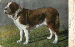 1901-1907 Printed Postcard posted St. Bernard Dog I C P & N Co. Germany