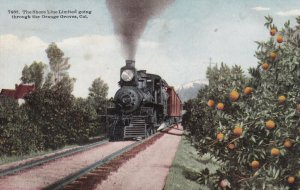 Vintage Postcard The Shore Line Limited Going Through the Orange Groves CA 7433