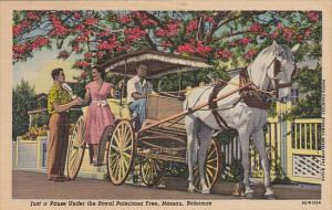Horse Carriage, Just A Pause Under The Royal Poinciana Tree, NASSAU, Bahama...