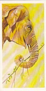 Brooke Bond Vintage Trade Card Vanishing Wildlife 1978 No 12 Asian Elephant