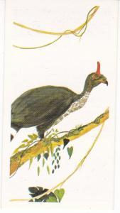 Trade Card Brooke Oxo Vanishing Wildlife No 30 Horned Guan