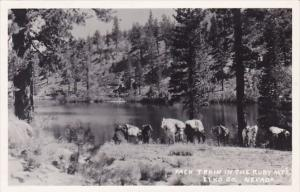 Nevada Elko County Pack Train In The Ruby MTS