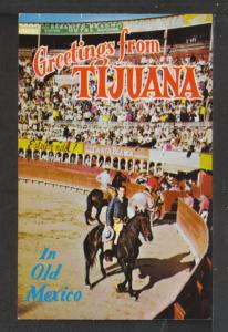 Greetings From Tijuana,Bull Fighters Postcard