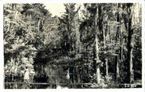Highlands Hammock State Park - Sebring, Florida FL