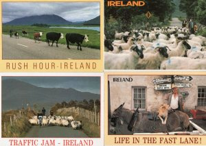 Irish Sheep Traffic Jam Dog Piggy Back 4x Ireland Comic Postcard s