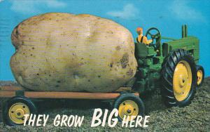 Idaho Exageration Large Idaho Potato 1965