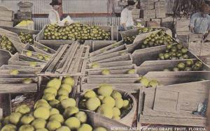 Sorting and Packing Grape Fruit, Florida, 00-10s