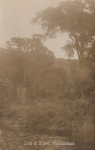 Ebb & Flow Wilderness South Africa Antique Real Photo Postcard